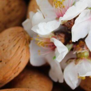 Mandorle e Frutta Secca